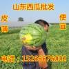 薄皮京欣西瓜价格便宜了陆地西瓜大量供应