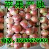 山东美八苹果极地信息15266676002