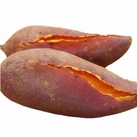 六鳌红薯红蜜薯番薯 海边沙地现挖红心薯5斤包邮香甜粉糯