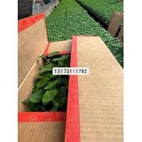 哈尔滨蔬菜苗场 嫁接蔬菜苗基地